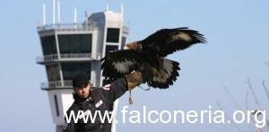 aquila aeroporto bari bird control