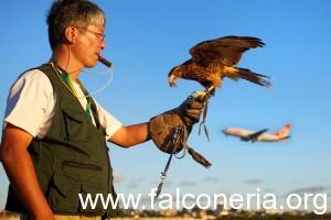 falconiere aeroporto