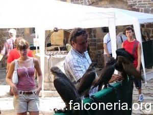 falconeria-300x225