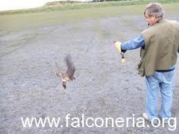 falconeria salto al pugno filagna
