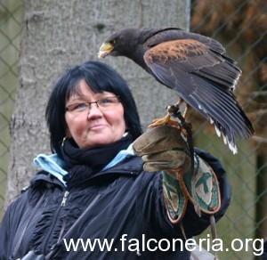 falconiera