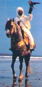 Falconiere marocchino a cavallo