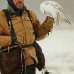 Falconiere canadese