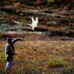 Falconiere dall' Alaska