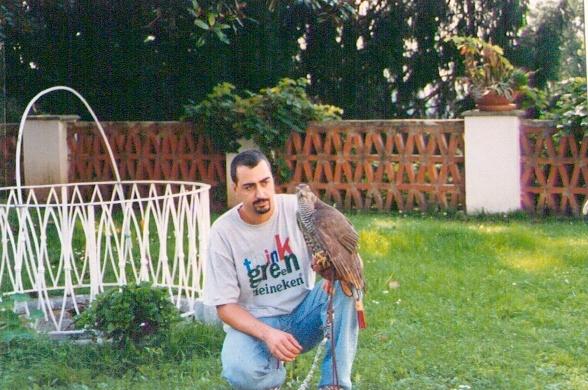 Maddalena (Accipiter Gentilis) sul mio pugno (1999)
