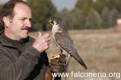 addestarmento falconi