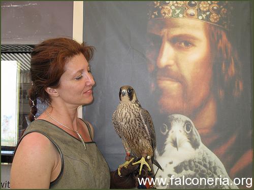 storia falconeria
