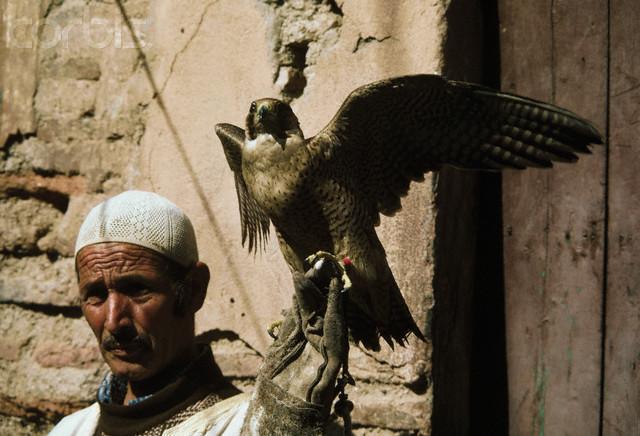 falconer_marrakesh