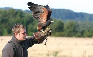 falconeria legge