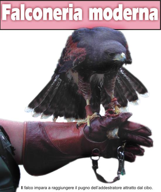 falco_3