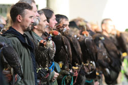 falconry_meeting