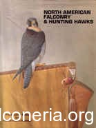 North American falconry