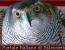 Benvenuto su www.falconeria.org!