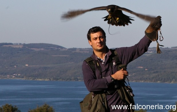 Falconeria 3