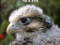 comprendere uccelli da preda nick fox