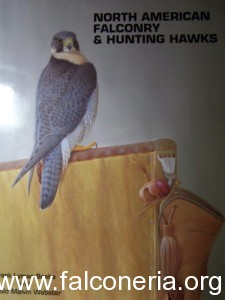 north american falconry and hunting hawks