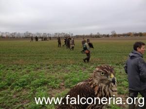 caccia col falco