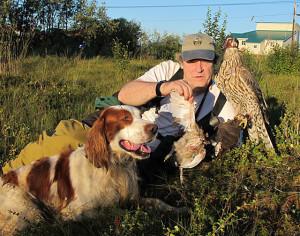 Come abituare il falco da caccia al cane