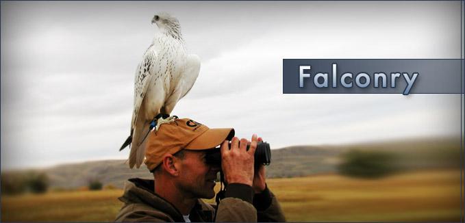 Telemetria per falconeria