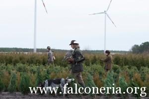 falconeria 2