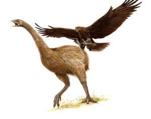 L'Aquila di Haast
