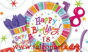 buon compleanno falconeria1