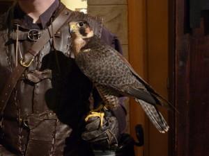 medieval_falconer_by_kirasdarklight-d7vpdo4
